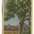 Joshua Palm on the Desert Postcard