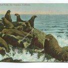 Seals on the Rocks San Francisco California Postcard