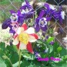 Aquilegia - Mrs Scott Elliot's Hybrids - 25 fresh seeds - Columbine