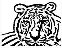 Bengal Tiger Pattern