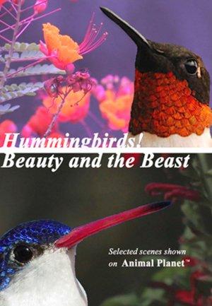 Hummingbirds! Beauty and the Beast