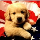 Apple iPad Custom Skin Sticker Decal - American Puppy