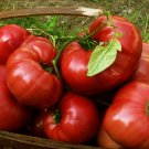 Pink Brandywine Heirloom Tomato Seeds 75+ garden family home plant seed vegetable fruit