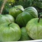 Tomatillo Verde Heirloom Variety 100+ seeds garden family home plant seed vegetable fruit