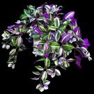 "12 Wandering Jew Plant cuttings 4"" to 6"" long purple green leaf home garden hobby"