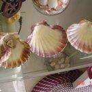 Nautical Decoration Sea Shell Clam Shell