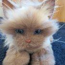 Hasbro FurReal Friends Creamy Tan Cat Interactive Toy Kitten Fur Real