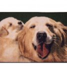Dog and Puppy Rug Pet Mat