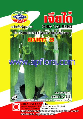 Apichaya Flora Vegetable seeds Cucumber-Amta III