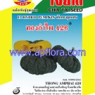 Apichaya Flora Vegetable seeds Pumpkin-Thong am pai426