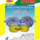 Apichaya Flora Vegetable seeds Pumpkin-Thongkam443