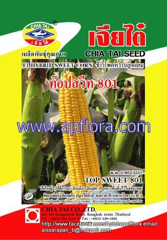 Apichaya Flora Vegetable seeds Sweet Corn-TOP-SWEET-801