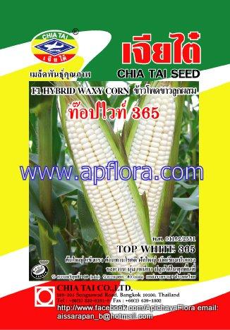 Apichaya Flora Vegetable seeds Sweet Corn-TOP-WHITE-365
