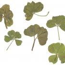4+5 Leaf Clovers