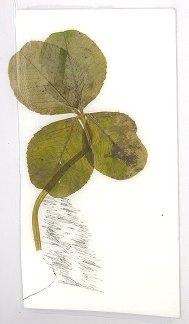 Cute Bunny Drawing w/ 4 Leaf Clover
