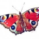 Butterfly Print Realistic watercolor painting Fine art Vibrant colors Spring Summer Home decor Gift