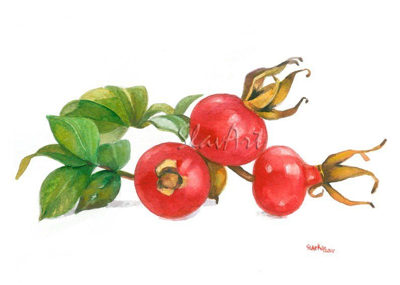 Rosehips Still Life Food Print Watercolor Fine Art Decor Kitchen art