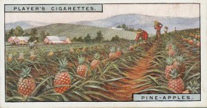 Player's Cigarette Card - Pineapples - 1928