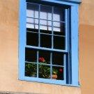 Geranium in Window