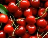 Delicious Cherry Tree Plant, Grow your own Fruit