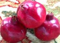 Pomegranate live Planting Tree Ready to Grow