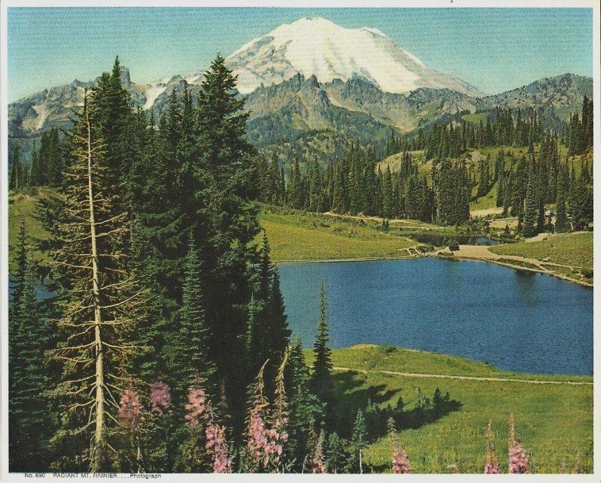 Vintage Print Radiant Mt. Rainier 8x10 Mountains, Wildflowers