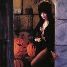 Elvira Mistress of the Dark Cassandra Peterson  Style L Poster Style E 13x19