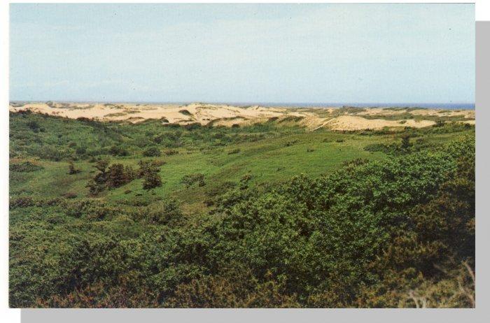 Stunning CAPE COD, MASS/MA POSTCARD, Sand Dunes
