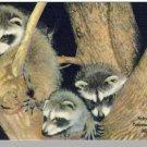 MIAMI, FLORIDA/FL POSTCARD, Raccoons/Tropical Hobbyland