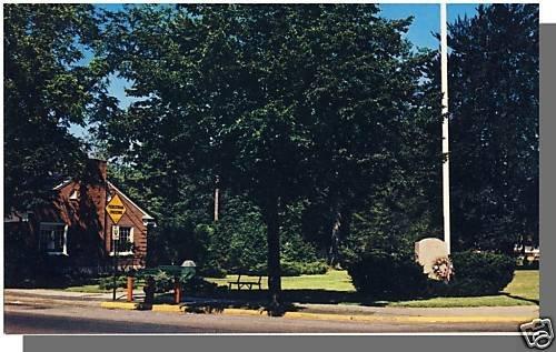 Nice NIANTIC, CONN/CT POSTCARD, The Green, Near mint!
