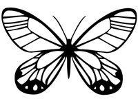 butrfly019