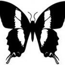 butrfly020