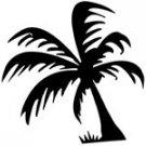palm009