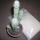 1 oz. SOUTH AFRICAN HOODIA GORDONII POWDER diet Plant