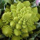 100 Veronica FRACTAL BROCCOLI Cauliflower Seeds ~TRIPPY