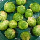 30 LONG ISLAND BRUSSELS SPROUTS seeds Vegetable