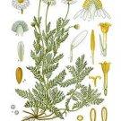375+ BROWN (black) MUSTARD seeds BRASSICA NIGRA Herb