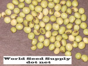Early maturing SOY BEANS- Glycine Max - 1 oz seeds