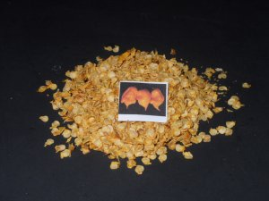 """YELLOW"" TRINIDAD SCORPION -Chili CHILLI Pepper HOT!! 15 seeds"