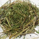 20g Pedicularis Procera Dried Herb- Giant Lousewort / Rocky Mountain Betony