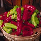 1/8 oz. CUBANELLE SWEET PEPPER seeds Banana Type Capsicum Annum