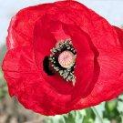 7,500 TURKISH RED POPPY Papaver Glaucum TURKISH TULIP POPPY seeds