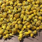 1g. FLOWER BUDS --TOOTHACHE PLANT Spilanthes Acmella