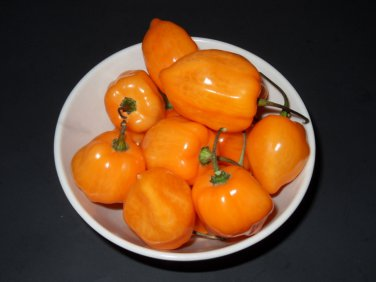 10 ORANGE SCOTCH BONNET habanero chile pepper seeds