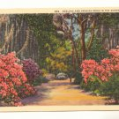 AZALEAS AND SPANISH MOSS IN THE SUNNY SOUTH POSTCARD    80