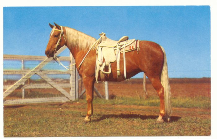 READY TO RIDE, GOLDEN PALOMINO, WESTERN TACK, POSTCARD   134