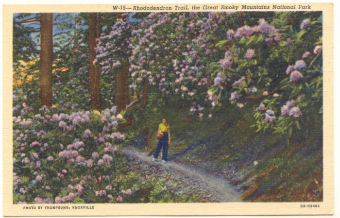 RHODODENDRON TRAIL , THE GREAT SMOKY MOUNTAINS NATIONAL PARK TENNESSEE, N. CAROLINA     #174