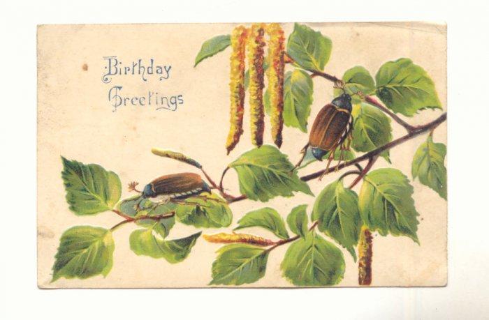 BIRTHDAY GREETING, BRANCH, BEETLES, VINTAGE POSTCARD   #217