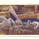 BEARS, BROOKFIELD ZOO, CHICAGO, ILLINOIS POLAR BEARS   POSTCARD #252