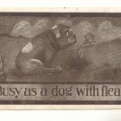 1911 BUSY AS A DOG WITH FLEAS, SAD BULL DOG Postcard   #443